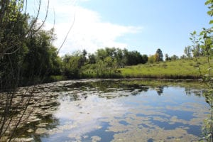 How Arvada Saved Two Ponds National Wildlife Refuge